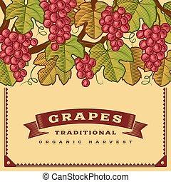 uvas, colheita, retro, cartão