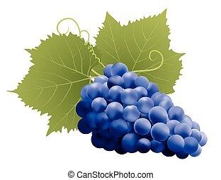 uvas, con, hojas, en, white., vector, ilustración