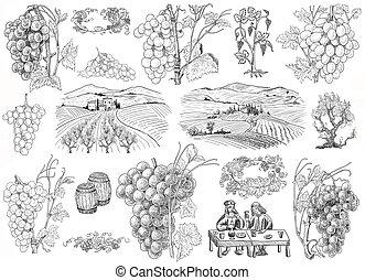 uvas, Ilustração