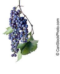 uvas, ligado, a, videira