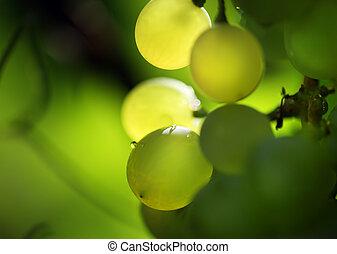 uvas, ramo