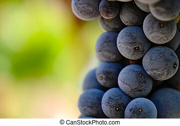 uvas vermelhas, cima