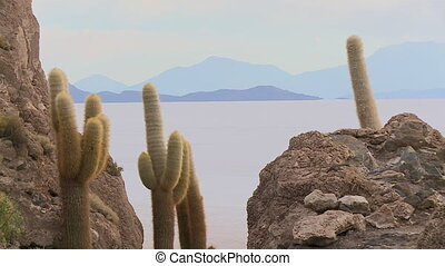 Uyuni Salt Lake Behind Cactus Island Rock, Bolivia - Wide...