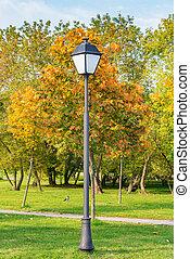városi park, világító, ősz, sunset.