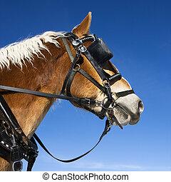 vázlat, horse.