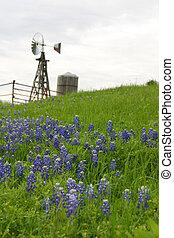 väderkvarn, sluttning, texas, bluebonnets