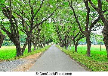 väg, genom, rad, av, grönt träd