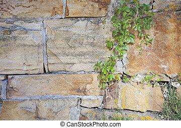 vägg, sandsten, vin