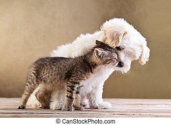 vänner, -, hund, tillsammans, katt