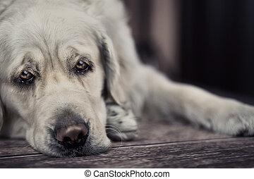 väntan, kapten, hund, trist