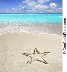 västindisk strand, sjöstjärna, tryck, vita sandpappra, sommar