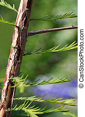 växande, färsk, träd, grenverk