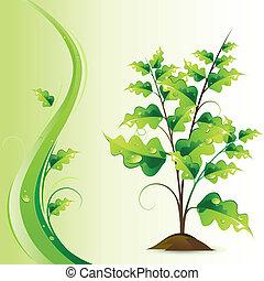 växande, träd