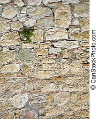 växande, vägg, växt, sten