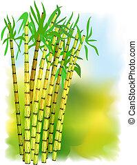 växt, cane., socker