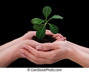 växt, gårdsbruksenheten räcker