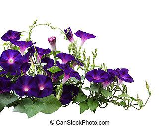 växt, härlighet, morgon