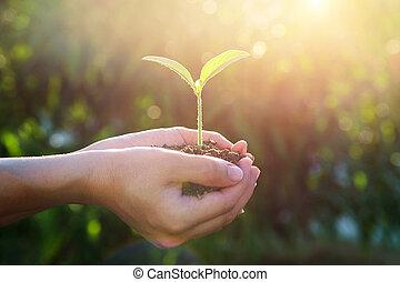 växt, in, den, hands.