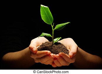 växt, in, räcker