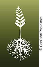 växt, och, rötter