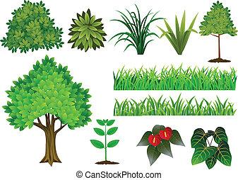 växt, och, träd, kollektion