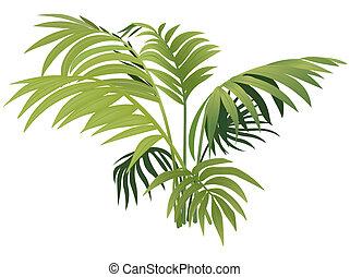 växt, ormbunke