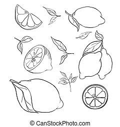 växt, samlingar, illustration, bladen, lemons., oavgjord, ...