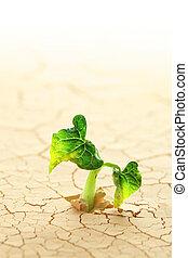 växt, spira, in, den, öken