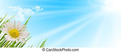 vår blomma, gräs, och, sol fond