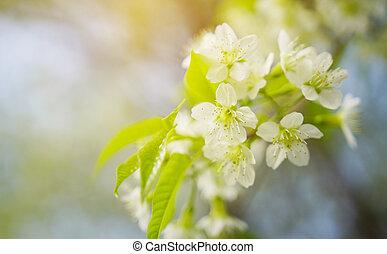 vår blommar, bakgrund.