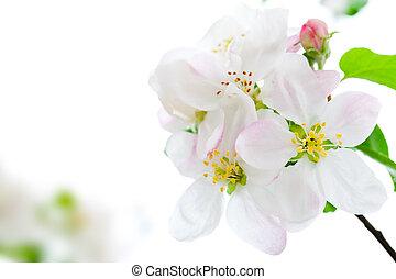 vår blommar