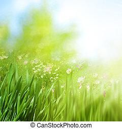 vår lövverk, med, tusensköna, blomningen, skönhet, naturlig, bakgrunder