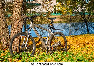 vélo, ensoleillé, parc, arbre, automne, garé, jour
