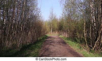 vélo, forêt, route, homme