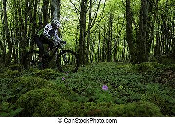 vélo tout terrain, dans, les, forêt