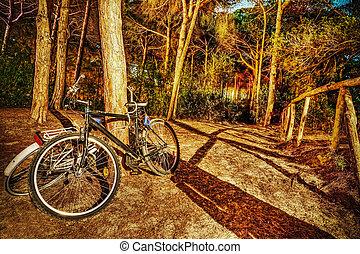 vélos, forêt, nuit