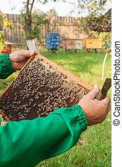 vérification, apiculteur, abeille, ruche, ensure, colony., santé