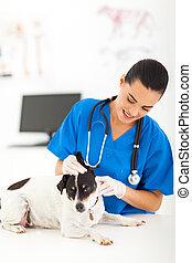 vérification, oreille, vétérinaire, chien, femme