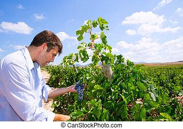 vérification, winemaker, tempranillo, oenologist, raisins,...