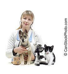 vétérinaire, animaux familiers
