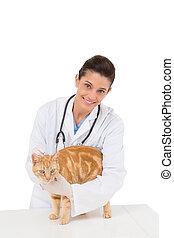 vétérinaire, chat, examiner