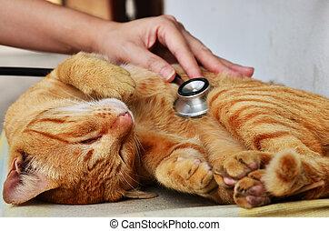 vétérinaire, chat