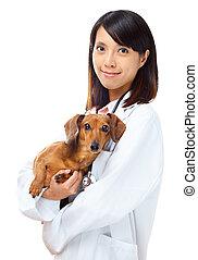 vétérinaire, chien basset allemand