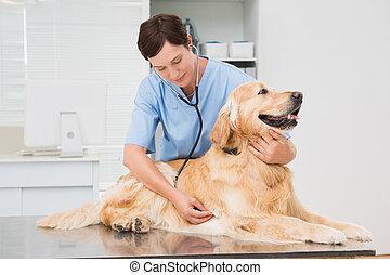 vétérinaire, chien, examiner, mignon
