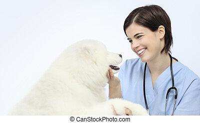 vétérinaire, chien, isolé, examen, fond, vétérinaire, sourire, blanc
