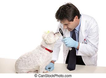 vétérinaire, chiens, yeux, chèques