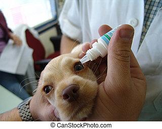 vétérinaire, chiot