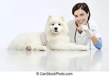 vétérinaire, concept, nourriture, régime, chien, vétérinaire, animal, clinique, table, sourire