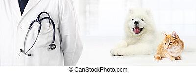 vétérinaire, concept, poche, vétérinaire, chien, isolé, clinique, stéthoscope, blanc, chat, bannière