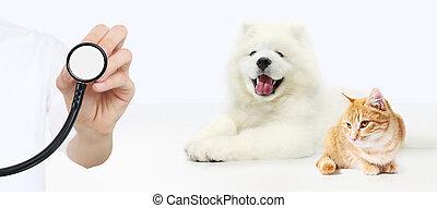vétérinaire, concept., stéthoscope, soin, isolé, chat, main, fond blanc, chien